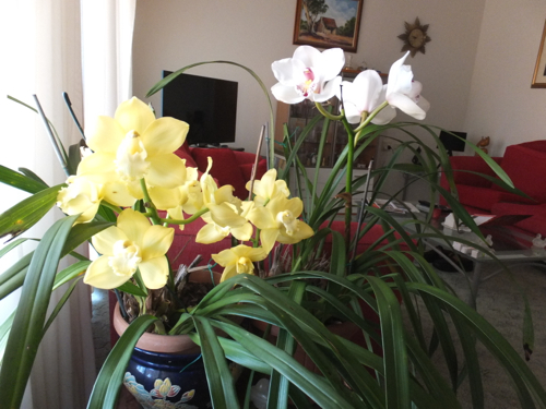 1409 Wes Orchids2