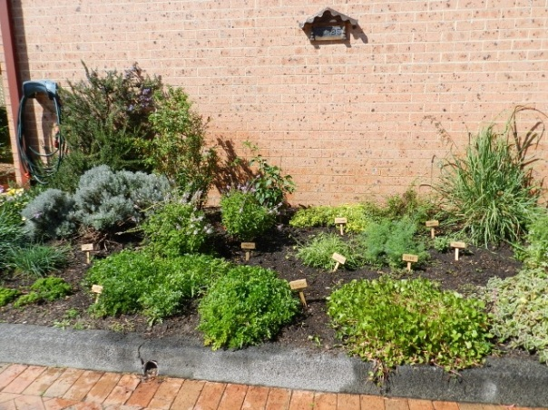 Our herb Garden near the Community Centre