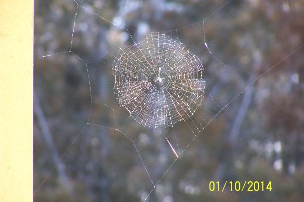 1410 Peters web