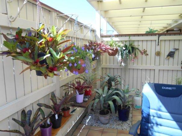 1411 Pickersgills flowers1