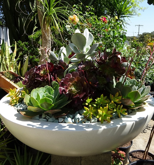 An impressive display of succulents thriving in the sun