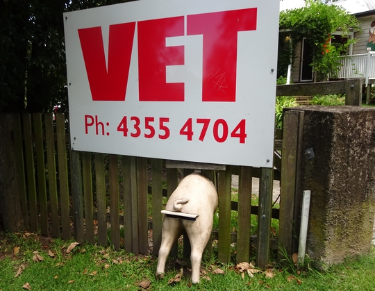 The vets are in the homely, old Upper Cottage and treat farm animals as well as pets