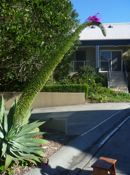 1605 Dino plant2