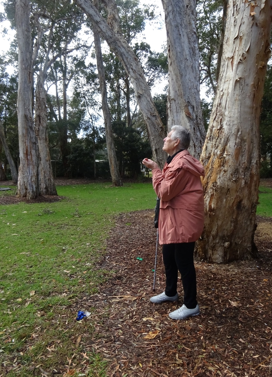 Under the majestic paperbark trees