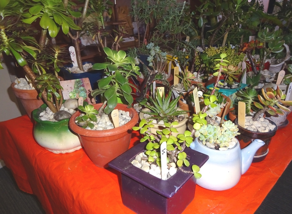 Preparation ….. pricing and displaying the plants