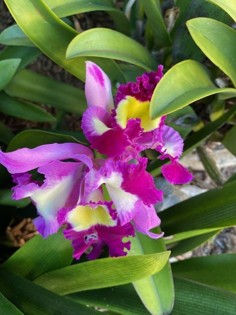 This image has an empty alt attribute; its file name is 2104-orchid.jpg
