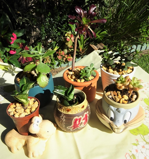 2105 Plant stall1