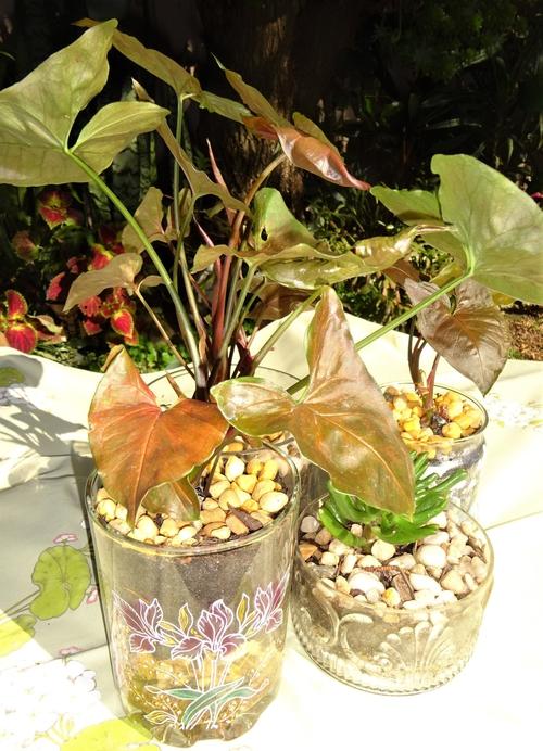 2105 Plant stall2