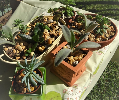 2105 Plant stall3