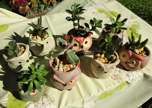 2105 Plant stall4